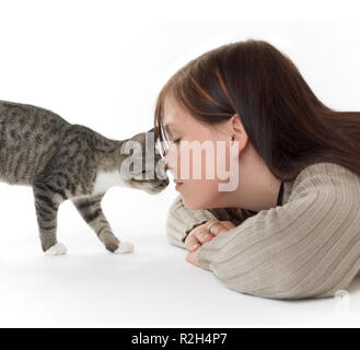 schmusekatze - Stock Photo