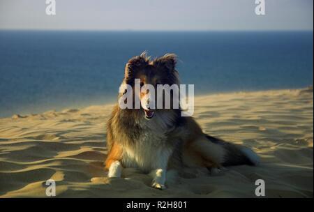scully in denmark - Stock Photo
