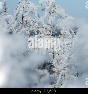 Winter background, morning frost on the grass - Stock Photo