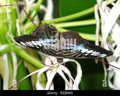 delicate beauty - Stock Photo