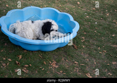 Hackney. London Fields. Dog show - dog having a rest in a paddling pool - Stock Photo