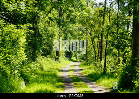 Germany, Bavaria, Upper Bavaria, Neuötting, forest path at Inn - Stock Photo