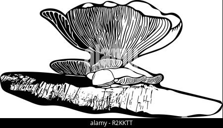 Black & white vector graphic of single Oyster mushroom growing on fallen silver birch. - Stock Photo