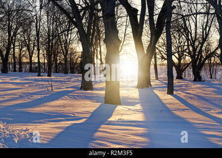 Sun shining through the winter trees casting long shadows. - Stock Photo