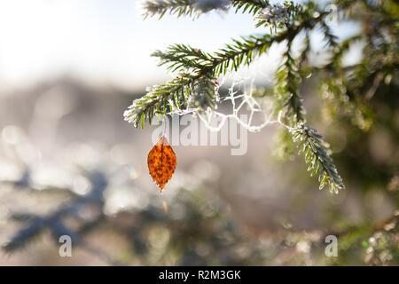 Frozen spruce branch and birch leaf - Stock Photo