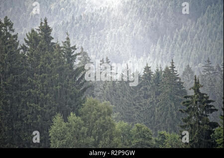 Misty landscape in Brocken,Harz,Germany.Brocken im Nebel und Regen,Harz. - Stock Photo