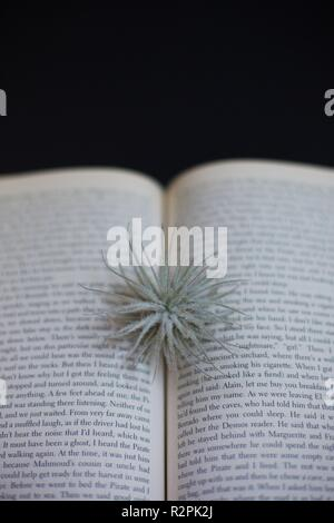 A book with a plant coming from its pages. - Stock Photo