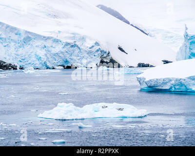 Two crabeater seals resting on ice floe in Lemaire Channel, Antarctic Peninsula, Antarctica - Stock Photo
