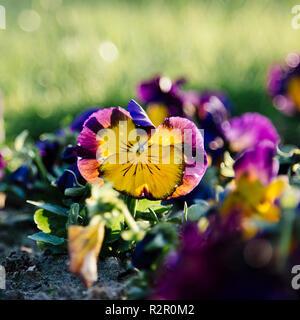 Botanic Garden of Bielefeld - Stock Photo