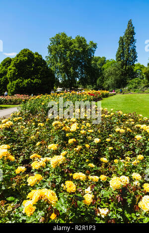 England, London, Regents Park, Queen Mary's Gardens, Roses - Stock Photo