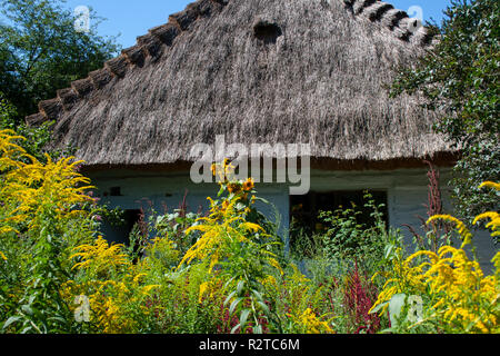 Old wooden country house with straw thatched roof amongs yellow grasses - Stock Photo