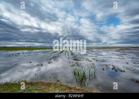 Shore of rice field and cloudy sky reflection in Albufera - Stock Photo