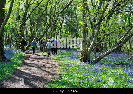 Ramblers walking in a Bluebell wpods - Stock Photo