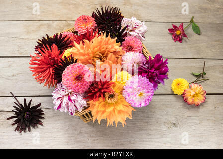 Dahlia flowers in a basket - Stock Photo