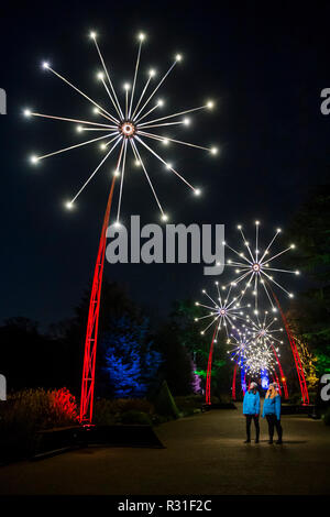 Kew Gardens, London, UK. 21st Nov 2018. An enchanted promenade of larger-than-life 11m illuminated flowers - Kew at Christmas, Kew Gardens - Anl illuminated trail through Kew's after-dark landscape, lit up by over one million twinkling lights. Ir Runs from 22 November 2018 – 5 January 2019. Credit: Guy Bell/Alamy Live News - Stock Photo