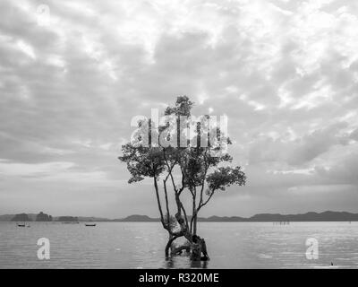 Lonely mangrove tree in the shallow water with mountain, beautiful seascape and sunset sky with cloudy background, Black and white style. - Stock Photo
