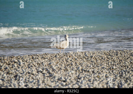 Bird on pebbles Mediterranean beach - Stock Photo