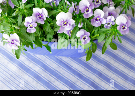 Pansy plants with lots of flowers in shades of lilac, violet and blue against a blue striped background, copy or text space - Stock Photo