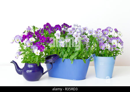 Pansy flowers in shades of lilac, violet and blue in 2 pots and a vintage enamel jug on white background, copy or text space - Stock Photo