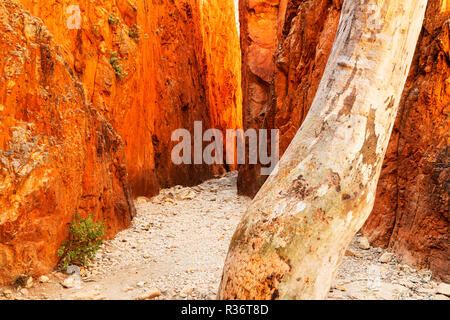 SpectacularStandley Chasm in the MacDonnell Ranges. - Stock Photo