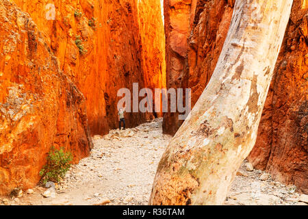 Person standing between the glowing rock walls of Standley Chasm. - Stock Photo