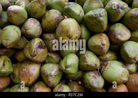 Stack of fresh harvested raw green coconuts in New Delhi, India. - Stock Photo