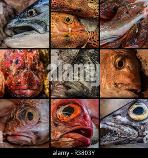 Collage of Fresh Fish sold in Auckland Fish Market - Stock Photo