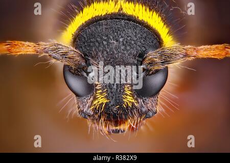 Extremely sharp and detailed study of an insect head taken with a macro lens stacked from many images into one very sharp photo. - Stock Photo