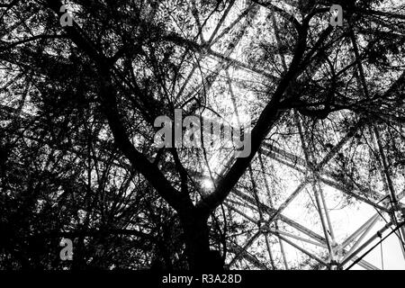Large tree in a huge greenhouse environment - Stock Photo