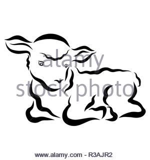 Cute lying little lamb with wavy hair - Stock Photo