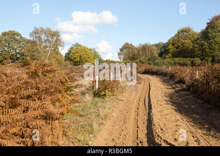 Sandy track through heath vegetation in Suffolk Sandlings heathland, Sutton, Suffolk, England, UK - Stock Photo