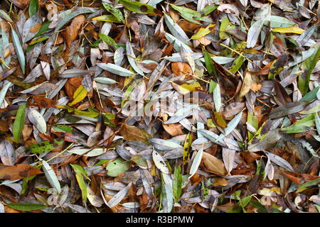 Differnt Autumn leaves on the ground. Season Autumn concept. Natural wallpaper background. Leaves pattern. Willow leaf, osier. - Stock Photo