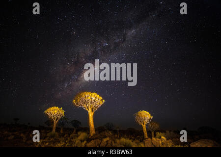 Africa, Namibia, Keetmanshoop. Milky Way over the Quiver tree Forest - Stock Photo