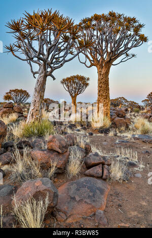 Africa, Namibia, Keetmanshoop. Quiver tree Forest at the Quiver tree Forest Rest Camp - Stock Photo