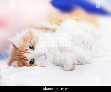 Pretty adult red cat is lying looking at camera - Stock Photo