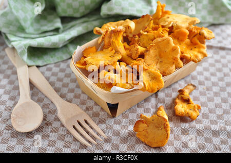 Chanterelle - Stock Photo
