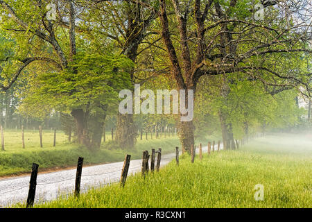 Sparks Lane in the morning, Cades Cove, Great Smoky Mountains National Park, Tennessee - Stock Photo