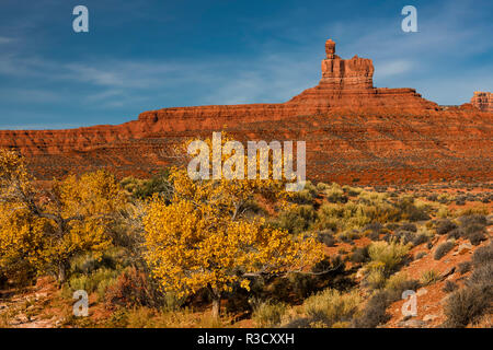 Cottonwood tree in fall color and monuments, Valley of the Gods, Utah - Stock Photo