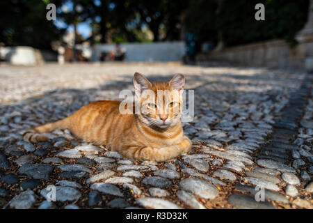 Shot of a wild street cat in Greece laying down on pavement with paws tucked in. - Stock Photo