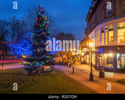 Christmas Tree on Montpellier Hill at dusk Harrogate North Yorkshire England - Stock Photo