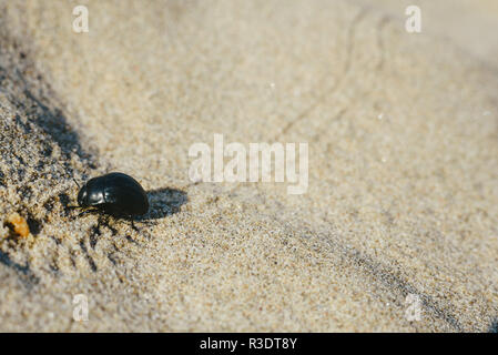 Beetle leaving footprints when walking on warm sand in some dunes in summer - Stock Photo