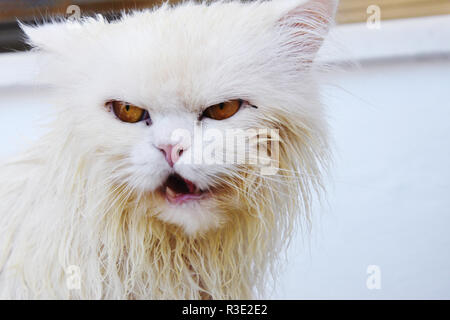 Funny angry wet cat - Stock Photo