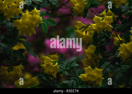 Pink and yellow flowers in garden - Stock Photo