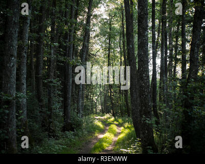 a forest clearing with beautiful sunbeams - Stock Photo