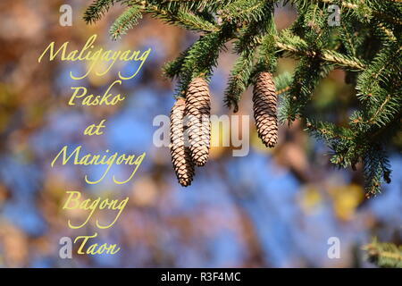 Close-up view of a mountain pine tree branch with fir cone hanging on branches, Christmas & New Year holiday's concept, Merry Xmas and Happy New Year. - Stock Photo