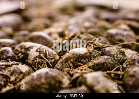Macro of wet stones on the ground - Stock Photo