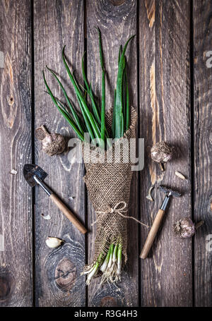 Raw green onion in sackcloth and garden tools nearby on wooden table - Stock Photo