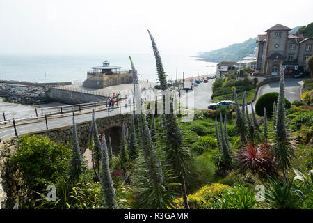 The Cascade Gardens in Ventnor on the Isle of Wight, designed circa 1900 by Edgar Harvey. (98) - Stock Photo