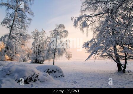 jack frost - Stock Photo