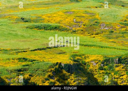 Farmland in Simien Mountain, Ethiopia - Stock Photo
